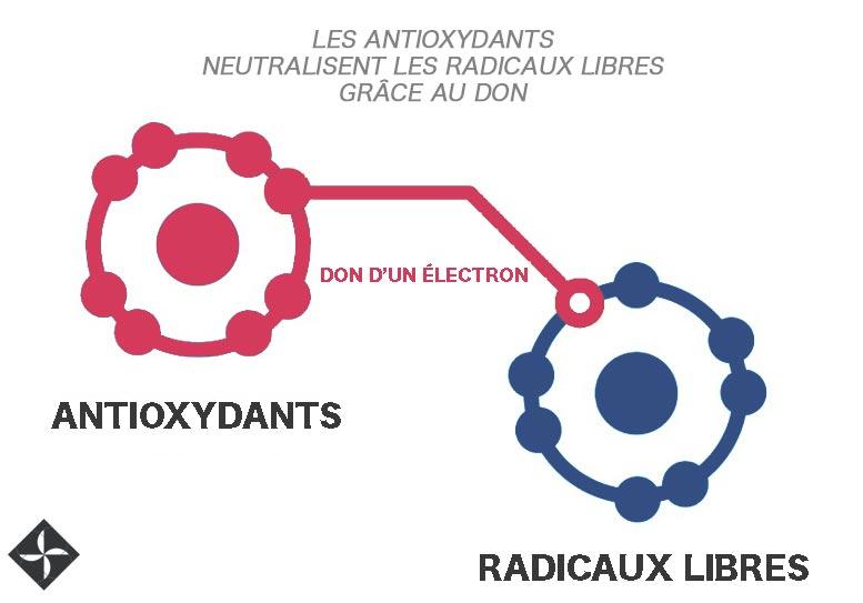 antioxydants radicaux libres